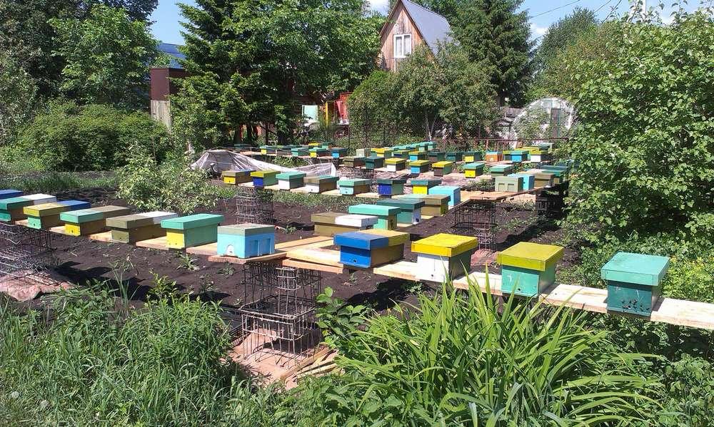 Современные методы лечения болезней пчел