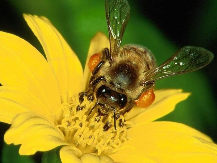Болезни у пчел и их профилактика