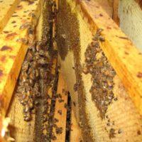 30202 Лечение пчел. Препараты и особенности