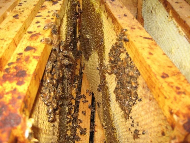 Лечение пчел. Препараты и особенности