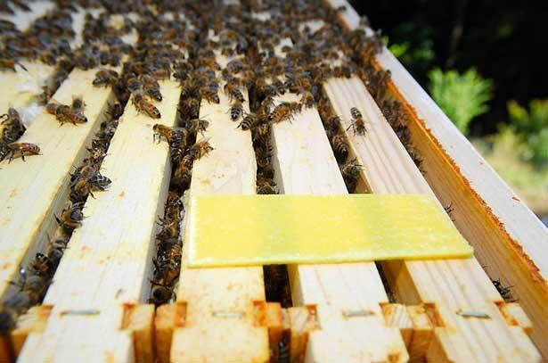 Болезни у пчел и их профилактика фото - 27523