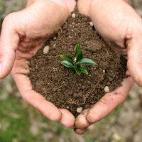 30229 Как эффективно применять удобрения, чтобы зря не тратить деньги