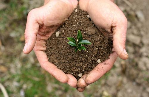 Как эффективно применять удобрения, чтобы зря не тратить деньги