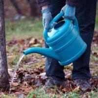 Поливать сад или не поливать? фото - 28715 200x200