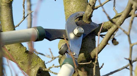 Срочно идем в сад – обрезать деревья