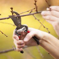 30360 Срочно идем в сад – обрезать деревья