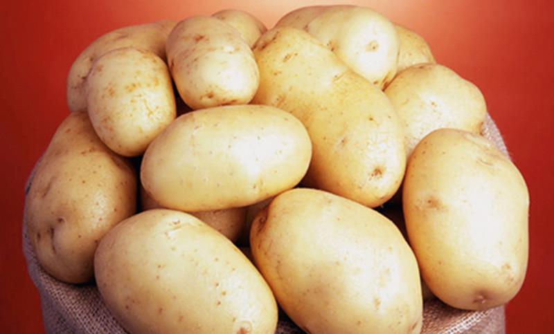 Картофель сорт Саванна (Голландия)