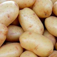 30417 Картофель сорт Нектар (Голландия)