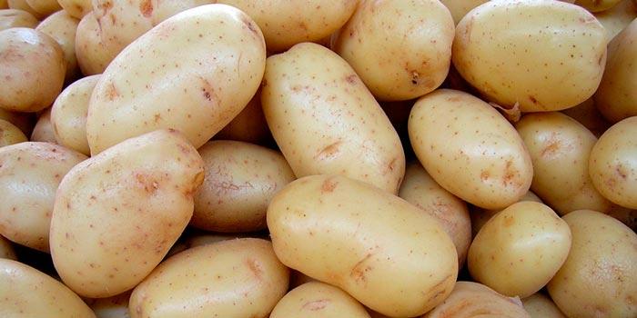 Картофель сорт Нектар (Голландия)
