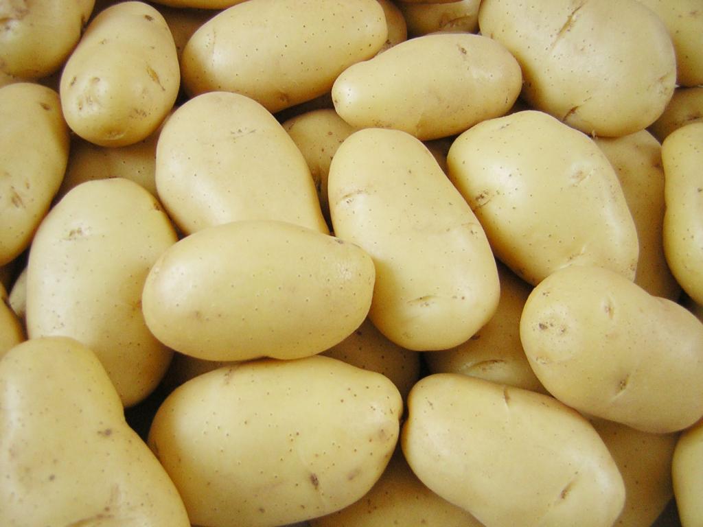 Картофель сорт Банба (Голландия)