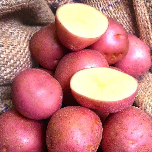 Картофель сорт Инфинити (Голландия)