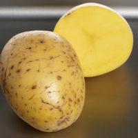 Картофель сорт Мадлен фото - 29077 200x200