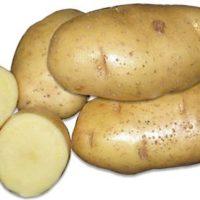 Картофель сорт Эвора фото - 29081 200x200