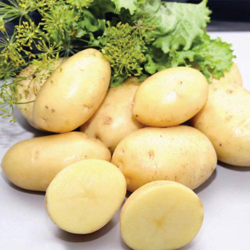 30446 Картофель сорт Коломбо