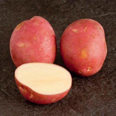 Картофель сорт Злагода