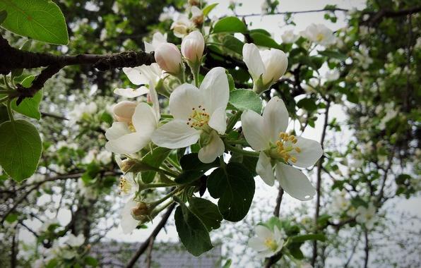 Как затормозить цветение, чтобы сохранить урожай фото - 29338