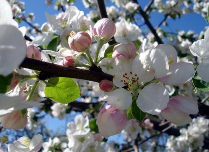 Как затормозить цветение, чтобы сохранить урожай