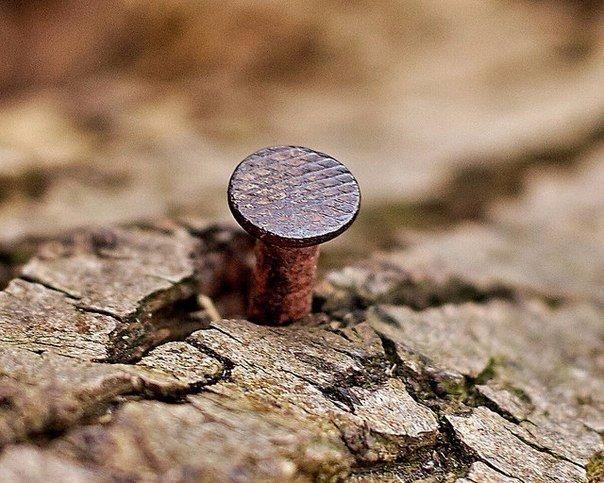 Зачем забивают гвозди в дерево? фото - 29346