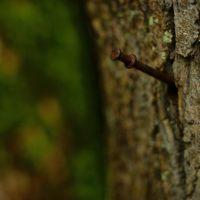 30528 Зачем забивают гвозди в дерево?