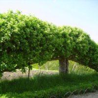 Когда выгоднее формировать из дерева пальметту фото - 29349 200x200