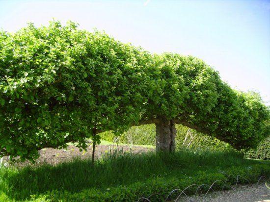Когда выгоднее формировать из дерева пальметту