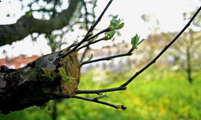 Что делать, если сломалось дерево фото - 29358