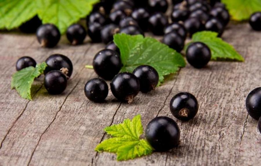 Черная смородина, вкусные сорта