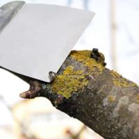 Лишайники и мхи в саду: уничтожить или оставить? фото - 29866 200x200