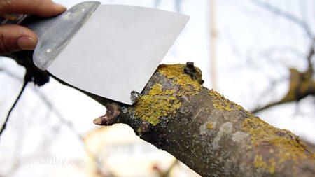 Лишайники и мхи в саду: уничтожить или оставить?