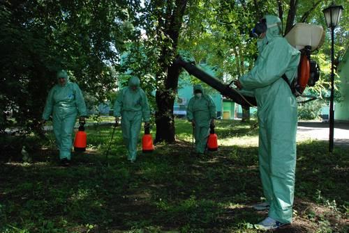 Пора пополнить садовую аптечку убойными препаратами от болезней