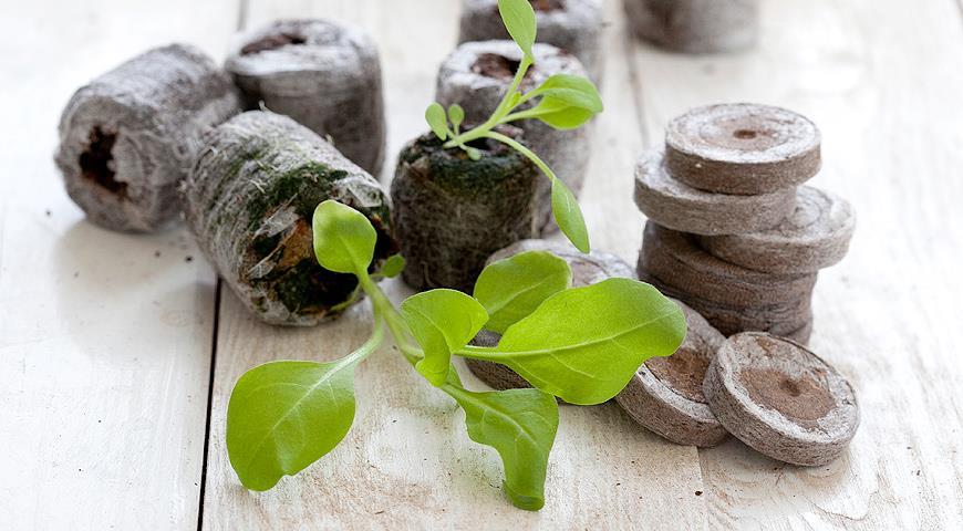 Торфяные таблетки – находка для ленивого садовода фото - 30650