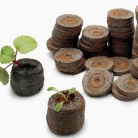 Торфяные таблетки – находка для ленивого садовода фото - 30651 200x200