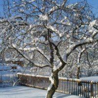 30651 Февраль: пора белить сад!