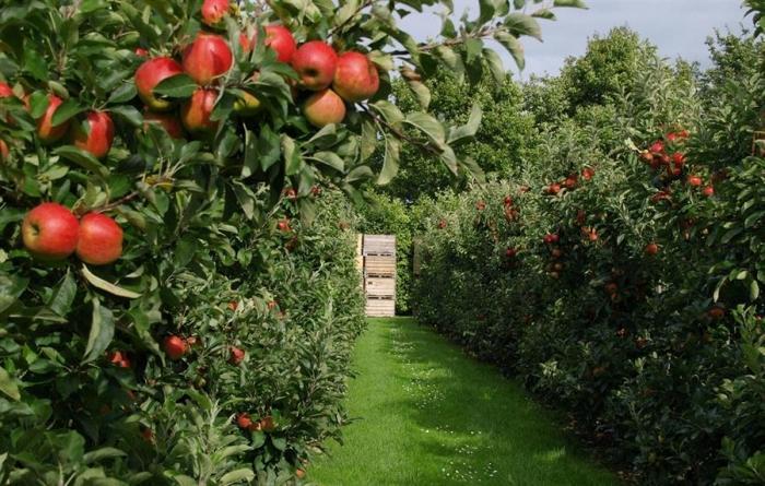 Что такое интенсивный сад? фото - 31635