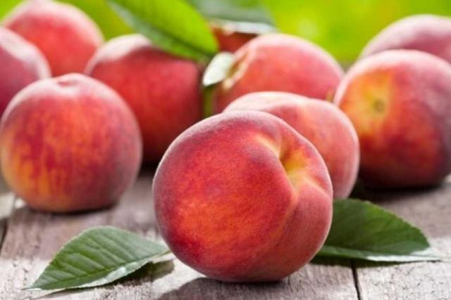 Персик в северных широтах