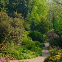 Дикий сад: не лишайте себя удовольствия фото - 34064 200x200
