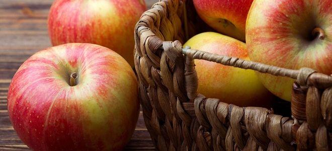 Зима: почему гниют яблоки фото - 34091