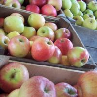 Зима: почему гниют яблоки фото - 34093 200x200