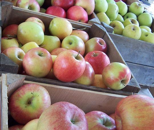 30940 Зима: почему гниют яблоки
