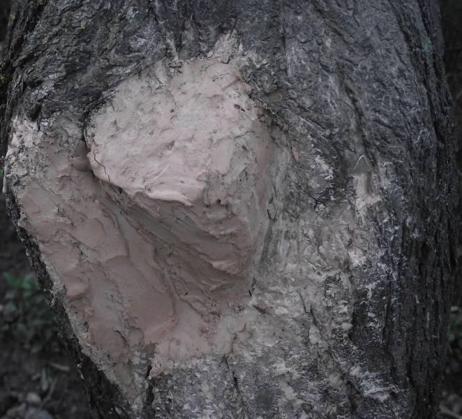 Не сыпьте соль на раны