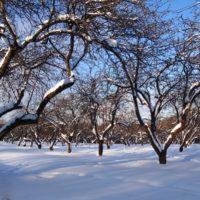 Зимние опасности фото - 35136 200x200
