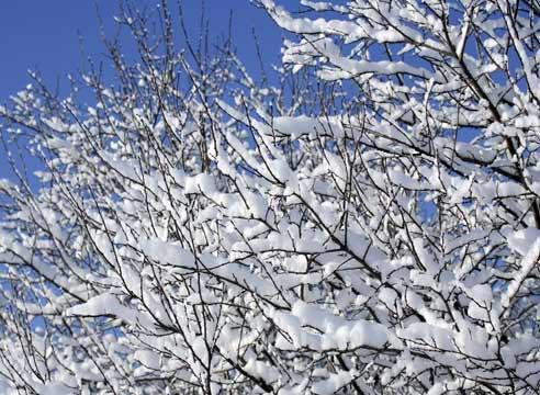 Зимние опасности фото - 35137