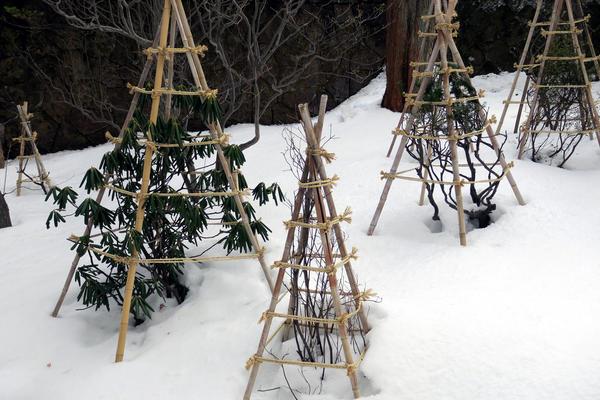 Чем садоводу заняться на новогодних каникулах?