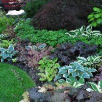 Теневыносливые растения для сада фото - 35146 200x200