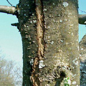 Уход за корой дерева