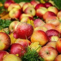 31053 Какие сорта яблок хранятся до весны