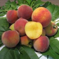 31097 Что сложнее выращивать: персик или нектарин?
