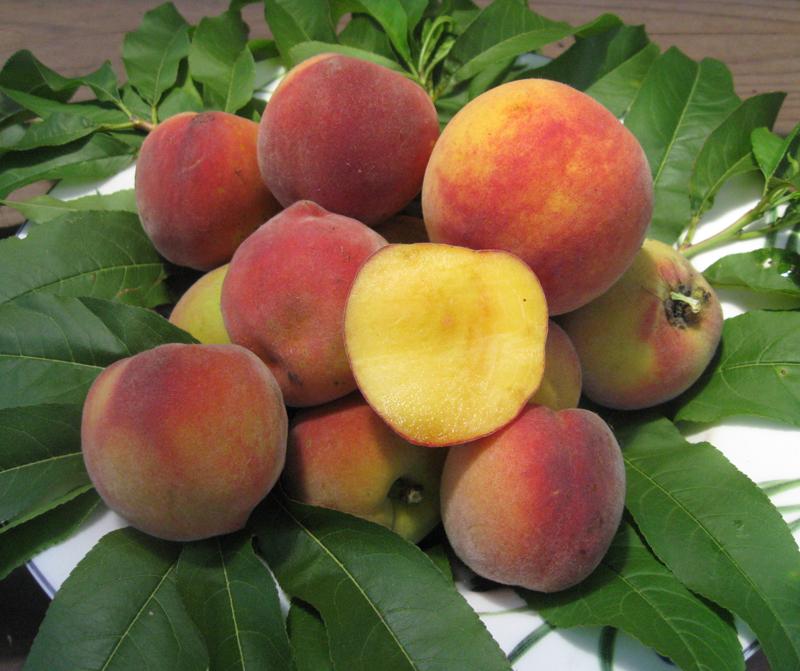 Что сложнее выращивать: персик или нектарин?