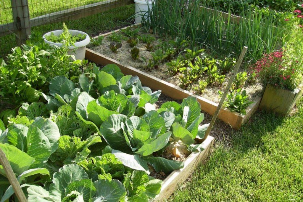 Товарищи овощи, кушать подано?
