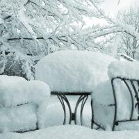 31203 Четыре причины, приводящие к вымерзанию деревьев